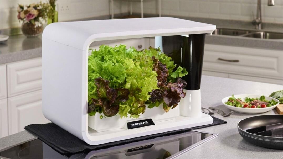Świeże warzywa w dwa tygodnie. Urządzenie, które podleje i oświetli rośliny za ciebie