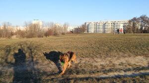 """""""Psia górka"""": mieszkańcy chcą dużo zieleni, mało betonu"""