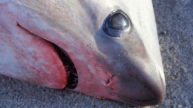 Tak zimno, że rekiny zamarzły