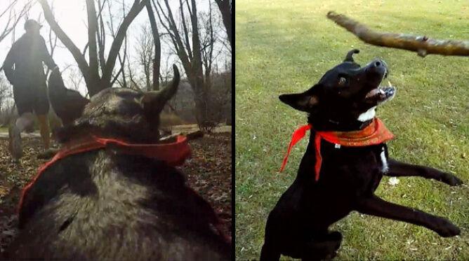 Pies Eto, mordercze ultramaratony i zakwasy