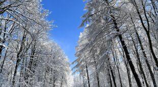 Zima w okolicy miejscowości Tyrawa Wołoska w Górach Słonnych (fot. PAP/Darek Delmanowicz)